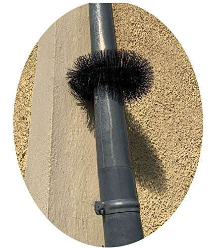 Qualitätsbürsten - Made in Germany Marderabwehr, Marderschutz für Fallrohre oder Bäume, 2 Stück