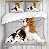 AXEDENRRT Duvet Cover Twin, 100% Microfiber 2 Piece Bedding Sets, Cavalier Purebred Cav Many Puppies Pansies Litter Loving King Bitch Charles Spaniel White Obedient, Luxurious - Moderate Thickness