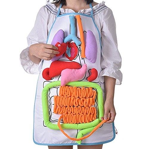 Unbekannt Per DIY 3D Plüsch gefüllt Viscera Internes Organmodell Für Kinder Herz + Darm + Magen + Leber Mit Transparente Schürze Für Kindergarten Kinder Kinder Physiologische Bildung Spielzeug