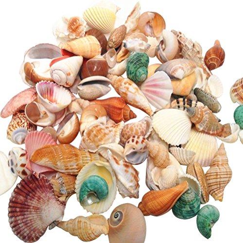 Winomo gemischte Strandmuscheln zum Basteln von Aquarien, Hochzeiten, Garten, Aquarium, 500 g