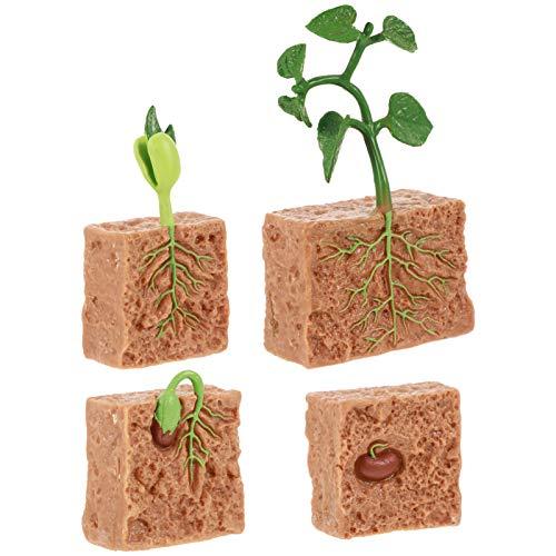 YARNOW 4 Piezas de Estatuillas de Plantas Ciclo de Vida Conjunto de Ciclo de Vida de Un Kit de Plantas de Frijol Verde Niños Aprendizaje Enseñanza Ciclo de Crecimiento de Insectos
