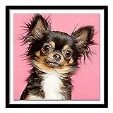 YIYEBAOFU DIY Pintar por números Animales Chihuahua con Pincel y Pintura acrílica Pintura para Adultos por números hogar con Pincel y Pintura acrílica Decoraciones Accesorios Adecu40X40cm(Sin Marco)