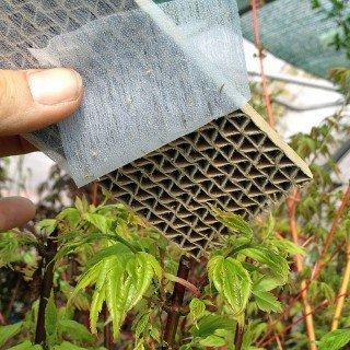 500 Stück Florfliegenlarven - Nützling u.a. gegen Blattläuse und Thrips