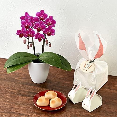 日比谷花壇 敬老の日 菓匠清閑院「秋夜のうさぎ」とミディ胡蝶蘭のセット