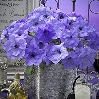 5 Pack of 10 Flower Seeds Evening Scentsation Petunia Seeds