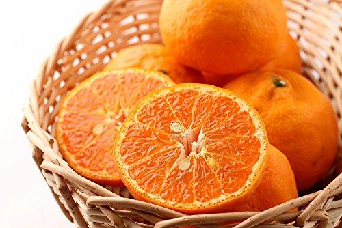 【訳あり】 カラーマンダリン/なつみ 5kg 和歌山県産 希少な完熟柑橘