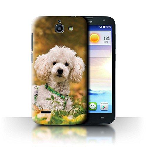 Hülle Für Huawei Ascend G730 H&/Eckzahn Rassen Pudel/Poodle Design Transparent Ultra Dünn Klar Hart Schutz Handyhülle Case