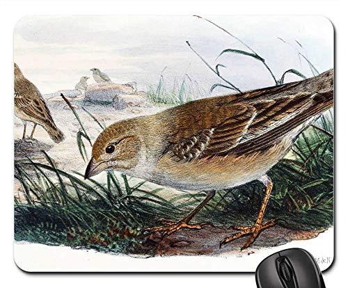 Mouse Pad - Brown Thrasher Bird Wildlife Outdoors Songbird