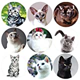 200 Pcs Realistic Cute Cat Stickers Kitten Roll Sticker for Party Favor Holiday Envelope Seal Stickers