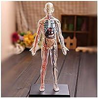 TKLLOVVE 人間の内臓解剖モデル-1:6全身透明人間の骨格モデル-60の取り外し可能な臓器と身体の部分の解剖モデル-教育機関向け