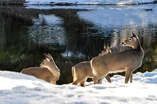 Voor Volwassenen Whitetail Deer Nabij Mcdonald Creek For Friend Kid Family Legpuzzel - 1000 Stukjes-
