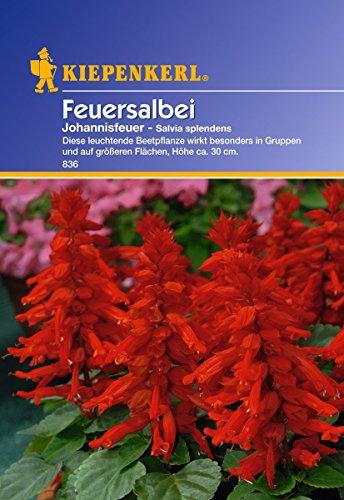 Sperli Blumensamen Feuersalbei...