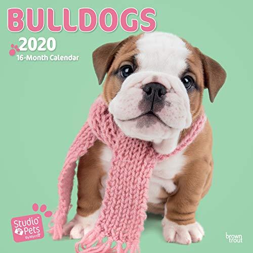 Bulldogs - Bulldoggen 2020: Original Myrna-Kalender [Mehrsprachig] [Kalender] (Wall-Kalender)