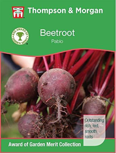 HOCH KEIMUNG Seeds Nicht NUR Pflanzen: Thompson & Morgan - RHS Gemüse - Beet Pablo F1-200 Samen