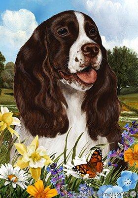 Best of Breed Springer Spaniel L/W - pavillons de jardin de fleurs d'été