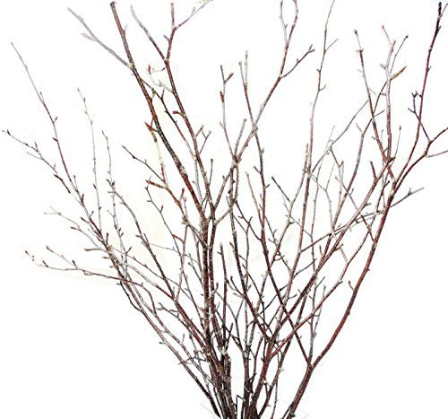"Tin Roof Treasure Natural Birch Branches 24"" to 36"" Pack of 20 Stems"