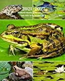 2021 -2022 18 Month Weekly and Monthly Planner July 2021 to December 2022: Frog Collage - Monthly Calendar with U.S./UK/ ... Reptiles & Amphibian Animal Nature Wildlife