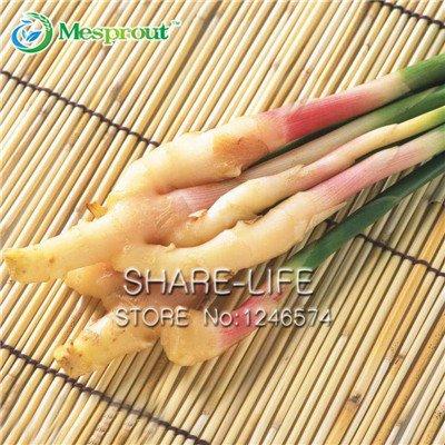 100 Pcs Ginger graines Semences Potagères Balcon Légumes Graines Bonsai plantes en pot Four Seasons Zingiber Graines Plantes