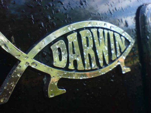 "Autoplakette, Fisch-Motiv, Aufschrift: ""Darwin"""