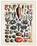 Vintage Vegetables Wall Art Print - (11x14) Unframed Picture For Home, Office & Kitchen Decor - Great Gift Idea Under $15