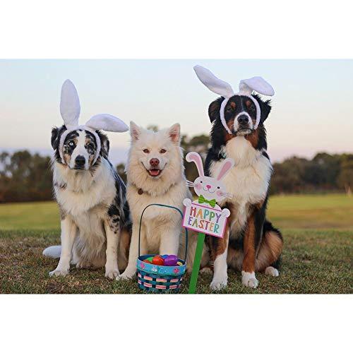 SINACO Kit de pintura DIY por Diamond para adultos, niños, decoración de oficina en casa, presentaciones de regalo para Her Him Taking Pictures of Dogs 15,7 x 11,8 in by