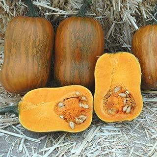 Squash Honeynut USDA Certified Organic Vegetable Seed - 50 seeds
