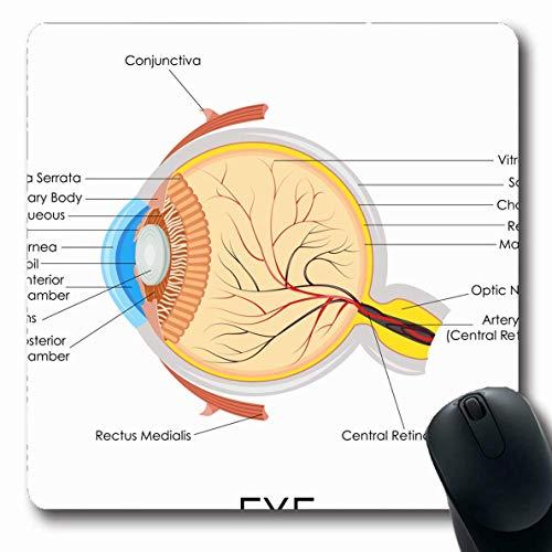Mousepad Oblong Augapfel Diagramm Menschliches Auge Anatomie Gesundheitswesen Medizin Wissenschaft Augenheilkunde Organ Physiologie Retina Rutschfeste Gummi Mauspad Büro Computer Computer Laptop Spiel