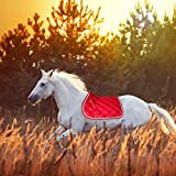 yingmu Sottosella da Cavallo Traspirante Assorbente Traspirante Equitazione Bareback Pad da Equitazione , Cuscino da Sella Inglese Comfort in Cotone per Dressage, Salto, Equitazione, Reasonable
