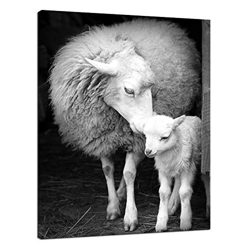 Welmeco Black and White Canvas Wall Decor Art Lovely Little Sheep Lamb Picture Prints Framed and Stretched Farmhouse Animals Poster for Home Living Room Decoration (16 x20 )
