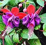 honic 100 pezzi multicolore rosa doppi petali fucsia bonsai in vaso di fiori da giardino planta lanterna appesa fiori, piante fiorite al coperto: 11