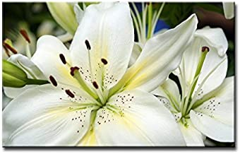 Alva443Anne Wall Art Painting White Hibiscus Pictures Print On Canvas Giclee Wooden Framed 12X16 Inch