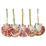 Hanging Christmas Tress Decoration 10pcs,Natural Shell with Rope 2-3 Inch, Seashell Ornaments for Beach Wedding