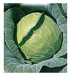 3300 C.ca Semi Cavolo Cappuccio di Copenhagen - Brassica Oleracea - In Confezione Originale - Prodotto in Italia - Cavolfiori - CP002