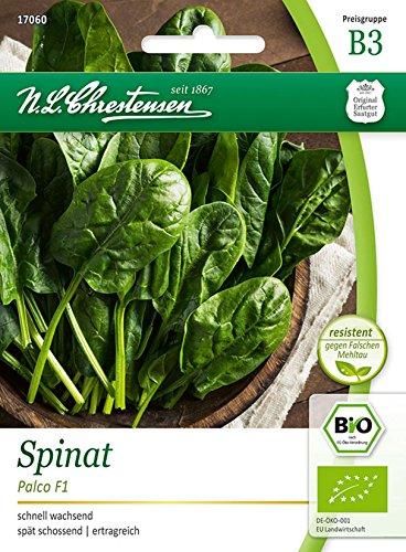 Bio Spinat 'Palco F1' Saatgut Samen (schnell wachsend)