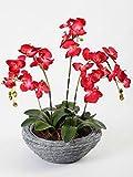 50 piezas/bolsa bonsái semillas de orquídea, hermosa phalaenopsis orquídea hogar jardín planta orquídea maceta calidad semillas de flores niños regalo 4