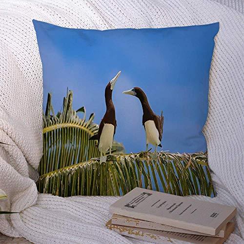 N\A Dekorative Kissenbezüge für Schlafsofa Couch Blue Tahiti Brown Tölpel Sula Leucogaster Exotische Vögel Tiere Wildlife Adult Alert Eyes Atoll Schnabel Soft Cushion Cover