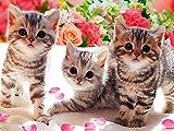 Mascota gato diamante bordado kit de punto de cruz decoración del...