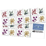 Winter Berries 10 Books of 20 First Class Forever US Postage Stamps Wedding Celebrate Engagement (200 Stamps)