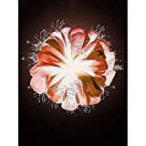 Greatminer - Kit de pintura de diamante para adultos, niños, decoración del hogar, oficina, regalos para ella, flores brillantes, 30 x 39,9 cm