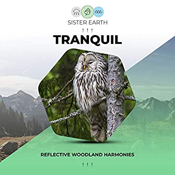 ! ! !  Reflective Tranquil Woodland Harmonies ! ! !