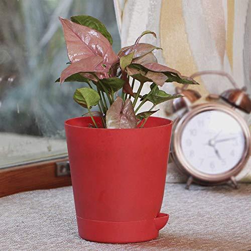 Ugaoo Syngonium Pink Neon Indoor Plant with Self Watering Pot