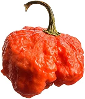 BTR Butch T Reaper Scorpion Seeds by Pepper Joe's | Cross Between The Hottest Peppers in The World - 10+ Chili Seeds Per Pack