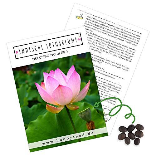 HappySeed -  Lotus Samen