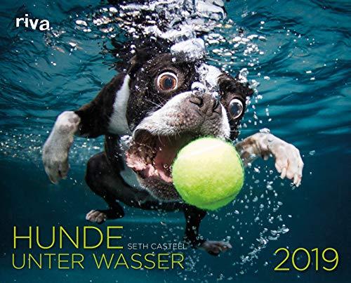 Hunde unter Wasser 2019: Wandkalender