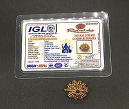 11 Mukhi Ganesh Rudraksha 24.38mm 2.50 GMS Nepal Rudraksha / Natural Eleven Face with Ganesh Trunk Rare Bead IGL Certified...