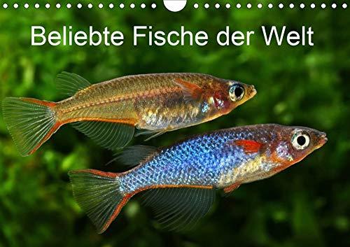 Beliebte Fische der Welt (Wandkalender 2020 DIN A4 quer): Farbenprächtige Süßwasserfische (Monatskalender, 14 Seiten ) (CALVENDO Tiere)