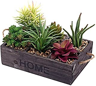 Best outdoor plant delivery Reviews