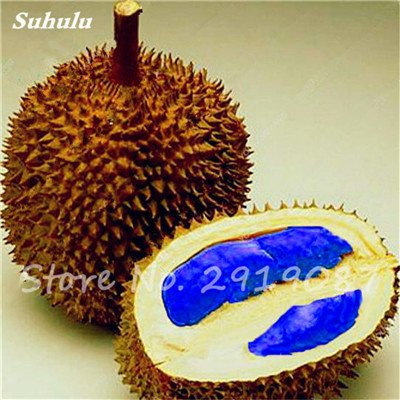10 Pcs Durian Seeds délicieux roi de fruits sains Tropical Giant Trees Jardin Plantes Bonsaï Non-GMO Haute Nutrition 6