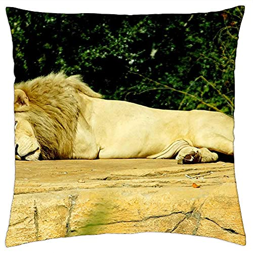 Cojín Decorativo Lion Sleep Dangerous Predator Animal World Zoo