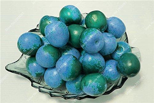 20pcs/sac exotiques japonais Jujube Graines Succulent non-OGM Bonsai Fruit d'ornement Arbre en pot plante facile à cultiver 2